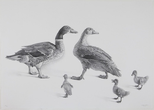 Familia de Gansos (Family of Geese), 2008