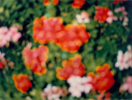 FLOWERS #5, 1995